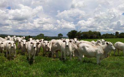 Belgo Bekaert apoia 'Desafio da Pecuária Responsável', iniciativa que promove o bem-estar animal