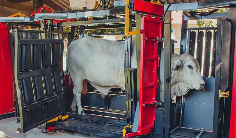 Troncos de contenção evoluem em bem-estar animal, facilidade de manejo e aumento da produtividade na pecuária