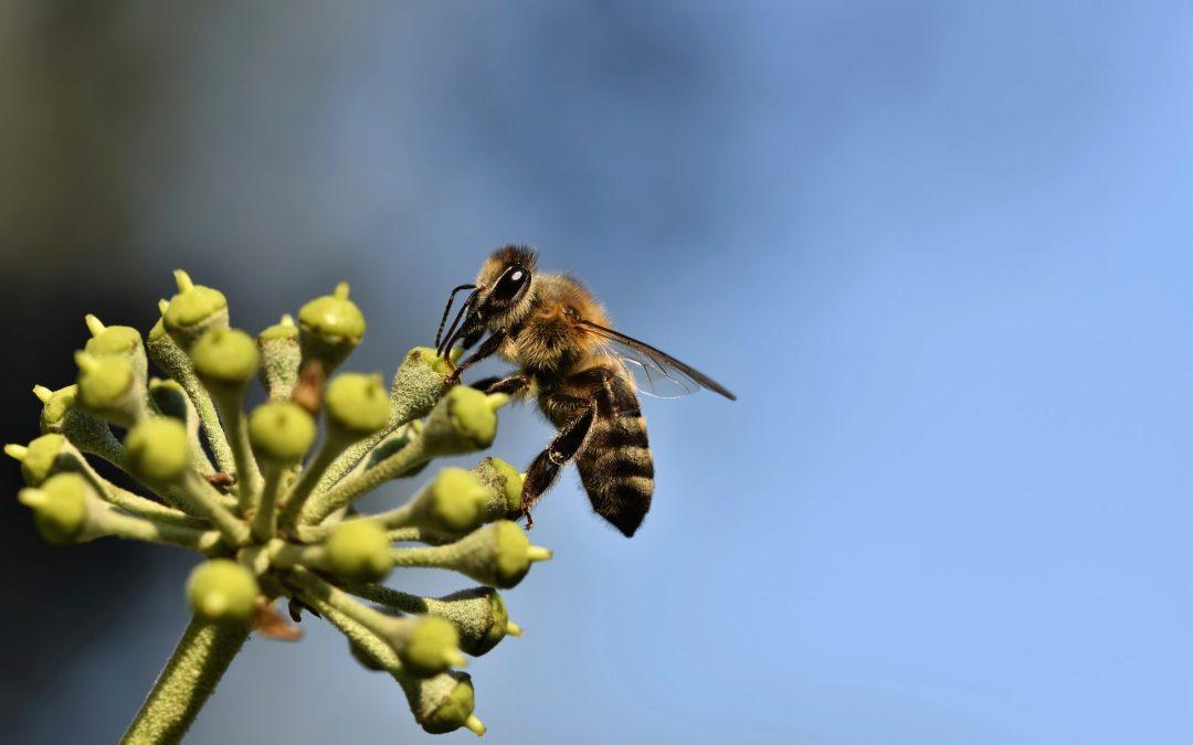 Curso gratuito sobre boas práticas entre apicultura e agricultura já conta com sete módulos